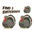 Find differences game turkey vector image vector image