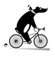 funny bear rides a bike
