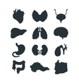 Internal organs silhouette vector image vector image