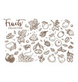 natural tasty fruits collection of monochrome vector image vector image