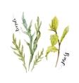 Watercolor arugula and green basil vector image