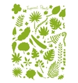 Tropical plants sketch for your design vector image