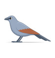 apostle bird on a white background vector image vector image