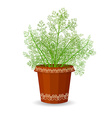 dill in a flower pot vector image