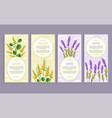sandalwood and lavender set vector image vector image