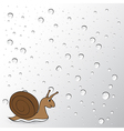 snail on water drops background vector image
