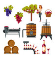 winemaking process from grapes growing vector image