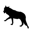 wolf silhouette vector image vector image
