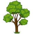 A tall tree vector image