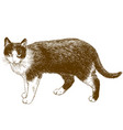 engraving of cat vector image vector image