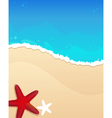 Beach with starfishes vector image vector image