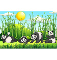 Four pandas in the field vector image vector image