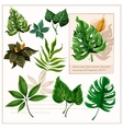Green tropical leaves pictograms set vector image vector image