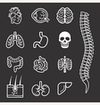 Human internal organs detailed icons set vector image vector image