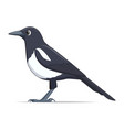magpie bird on a white background vector image