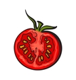 Sketch style drawing of ripe red half tomato vector image vector image