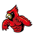 cardinal bird mascot show his muscle vector image vector image