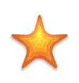 Orange starfish with shadow isolated on white vector image