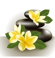 Spa still life with frangipani flower vector image