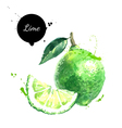 Watercolor hand drawn lime Isolated eco natural vector image vector image