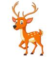 cartoon cute deer on white background vector image vector image