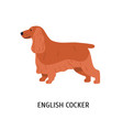 english cocker spaniel cute funny purebred vector image