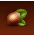 Full Unpeeled Hazelnut with Leaves vector image vector image