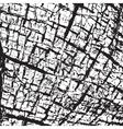 Skin Texture vector image vector image