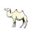 arabian camel hand drawn icon vector image vector image