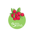 bright lingonberry icon vector image vector image