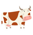 cute cow farm animal character vector image vector image
