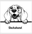 dachshund - peeking dogs - - breed face head vector image