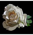 large white rose on a black background vector image vector image