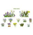 spring flowers set crocus scilla primula vector image vector image