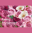 spring roses background realistic vector image vector image