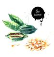 Watercolor hand drawn sesame Isolated eco natural vector image