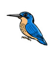 kingfisher side view vector image vector image