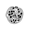 pomegranate doodle and graphic slice fruit vector image vector image