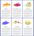set of marine and domestic fishes color banners vector image