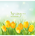 Spring Background - with Yellow Tulips Flowers vector image vector image