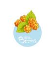 bright cloudberry icon vector image vector image