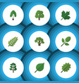 flat icon bio set of linden oaken leaves and vector image vector image