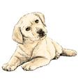 Labrador Retriever puppy 02 vector image vector image