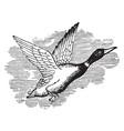 wild duck vintage vector image vector image