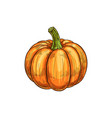 orange pumpkin with stem isolated raw gourd squash vector image