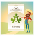 pack of parsley seeds icon vector image vector image