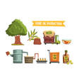 process olive oil production from cultivation vector image