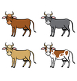 cow color vector image