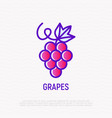 grapes with leaf thin line icon vector image vector image