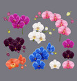 orchid collection purple pink white exotic vector image vector image